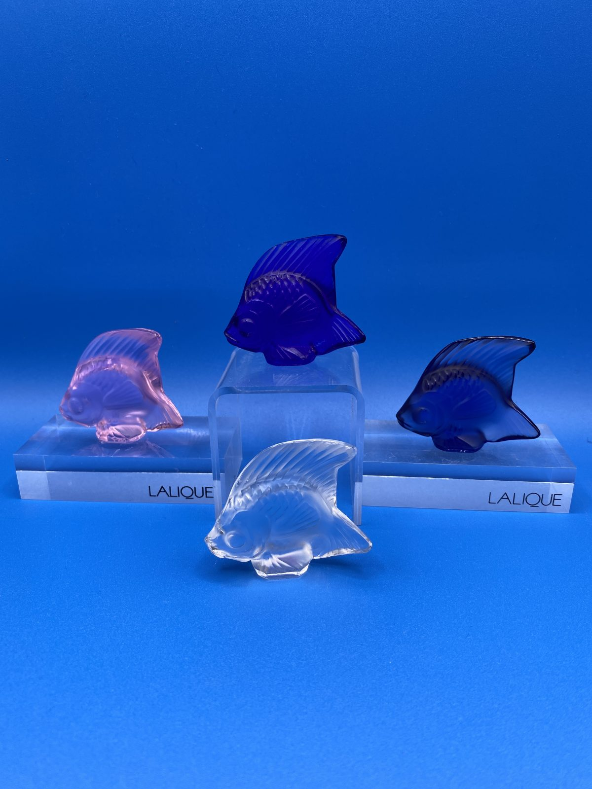 G1 - A selection of Lalique Coloured Crystal Angel Fish by Marie-Claude Lalique c.1990. They come in 24 colours.  £95 each.
